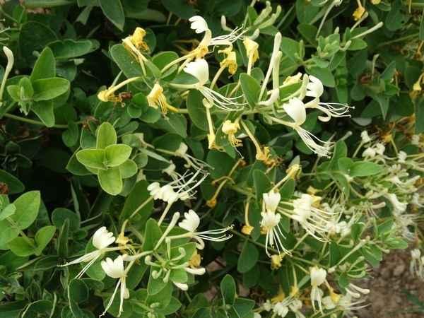 河北花卉种植
